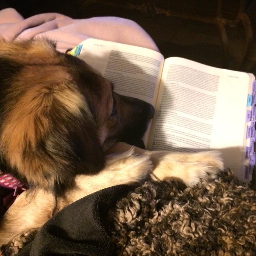 tess bible pic