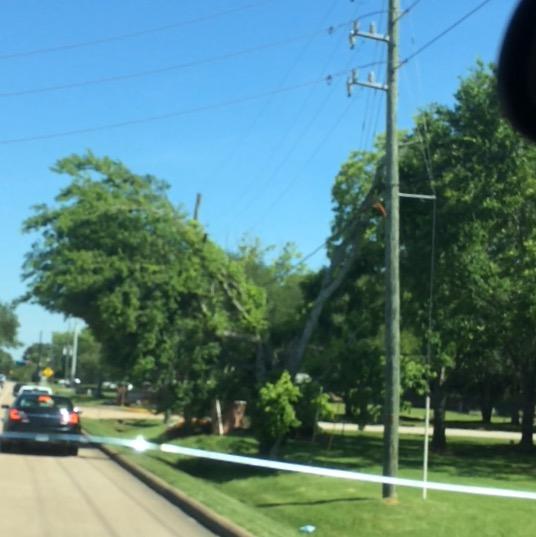 shaped tree neighborhood